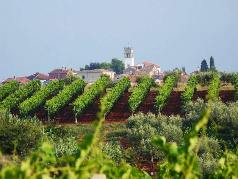 Upoznajte vinariju Ravalico