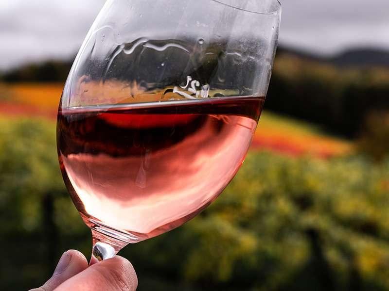 Ispravno kušanje vina