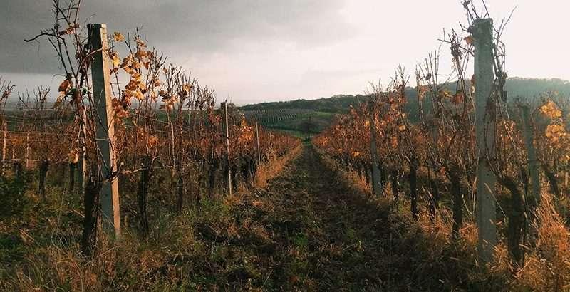 Vinograd i podrum Jurković